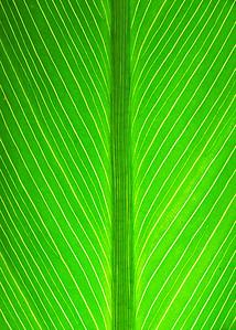 Leaf_008287