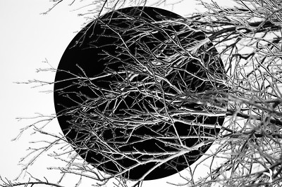 Dark sphere, abstract photo art of tree branches