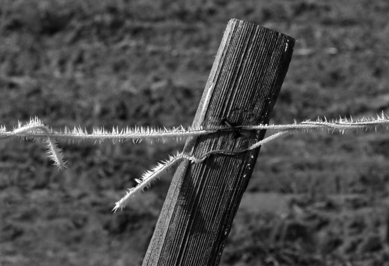 Frosted Wire B&W