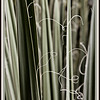 Yucca Abstract
