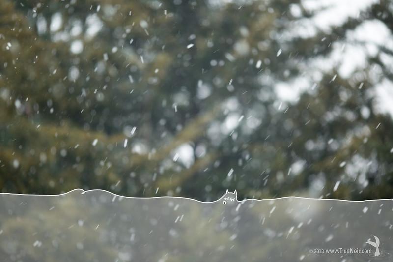 Creature of blizzard 01, creative photo art