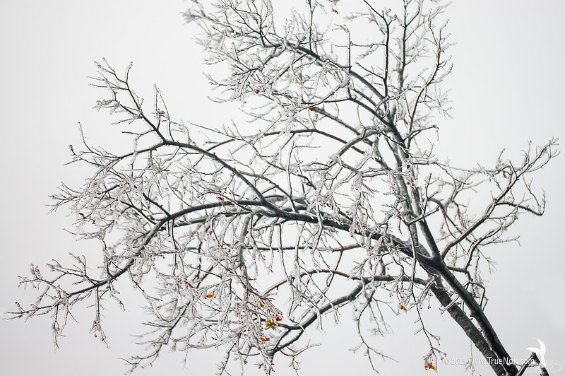Frozen tree branch, abstract nature photograph