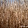 Bending Reeds I