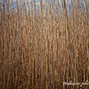 Bending Reeds II