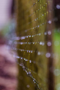 Water drops on a mesh fence.