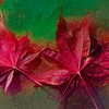 2013-11-11. Fall leaves abstract.