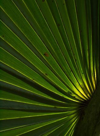 Palm Frond Closeup