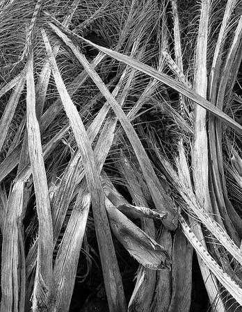 Dry Palm Fronds - Makalawena Beach - Big Island, Hawaii - December 2006