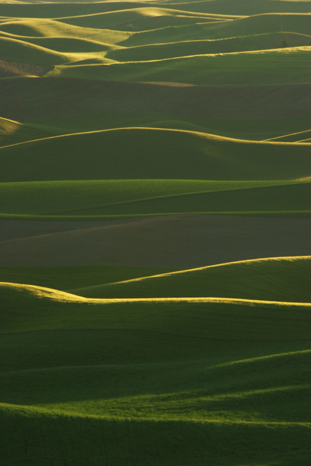Last light on wheatfields, Washington