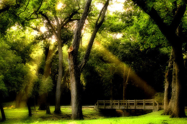 Abstract image of a wooden footbridge with crepuscular rays streaming down through the trees (20080824_11279_c)