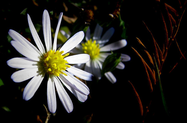 (20081127_15027_autumn)