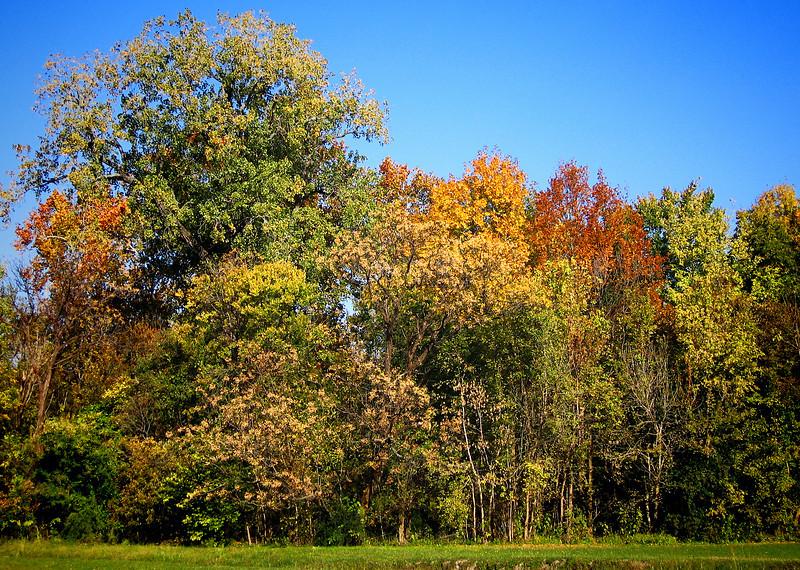 157_5744 _autumnJPG