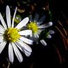 20081127_15027_autumn