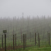 Fog in American Canyon Vineyard