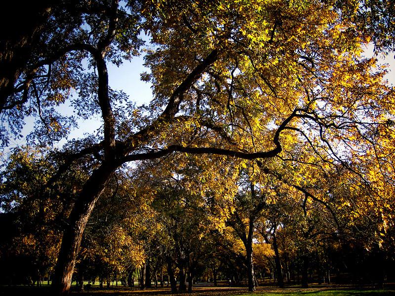 157_5753_autumn
