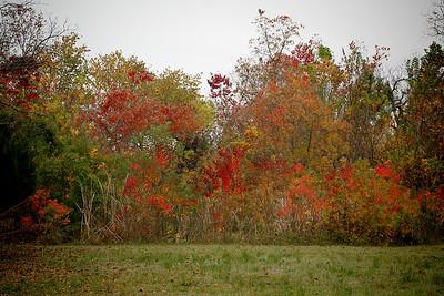 2009_11_08_037687_autumn