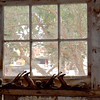 Window Frame - Rush Ranch
