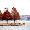 2008_12_13_002386_autumn
