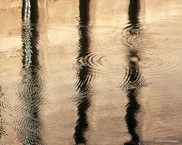 Jan 17<br /> Ripples, Reflections and more....<br /> <br /> A little bit of abstract photography, the reflection of a buiding. The ripples were caused by ducks diving under water.<br /> <br /> Thanks for all of the wonderful comments yesterday!!