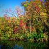 20081101_14431_autumn