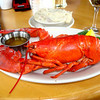 Lobster in Bar Harbor Maine