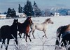 Nice winter shot of local horses.