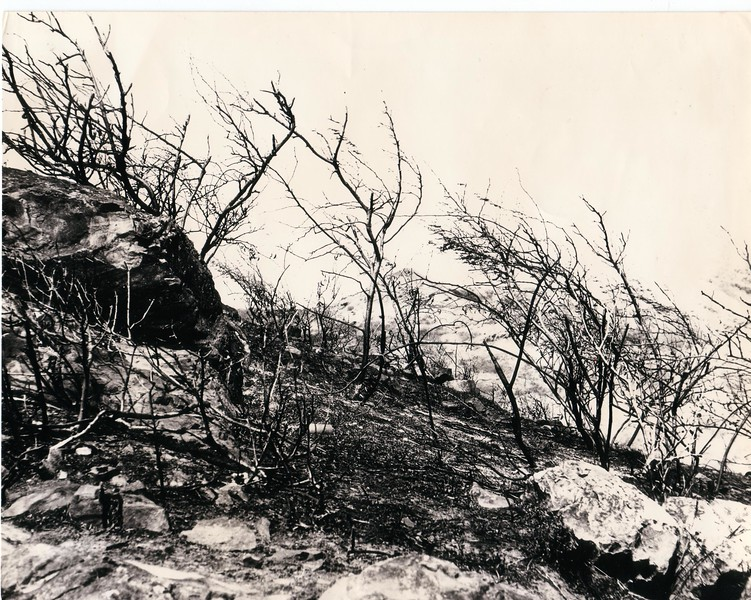 High contrast shot of a file on the hills above Lanikai, circa 1975.