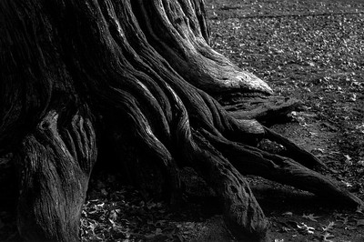 twisted_roots_19-1-7