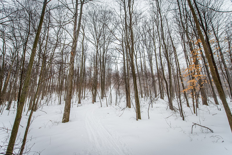 Cross Country Skiing_Snake Hill_West Virginia_photo by Gabe DeWitt_February 21, 2015-8
