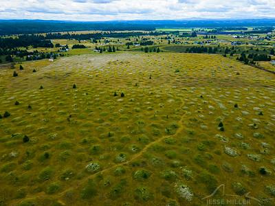 Mima Mounds in Olympia, Washington