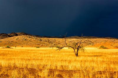 Namibia Golden Light