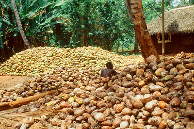 Coconut processing on Zanzibar