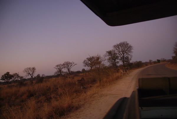 Africa-Wendy