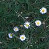 _MG_8957_crop.jpg