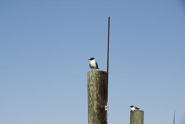 Watch Bird