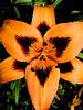 The center of it all in an orange lily.