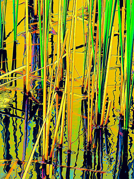 Water reeds abstract, original photo was shot at Glacier Ridge Metro Park outside Dublin, Ohio