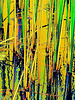 Water reeds abstract, original photo was shot at Glacier Ridge Metro Park outside Dublin, Ohio