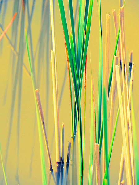Abstract water reed reflections in a marshy area of Glacier Ridge Metro Park outside Dublin, Ohio.