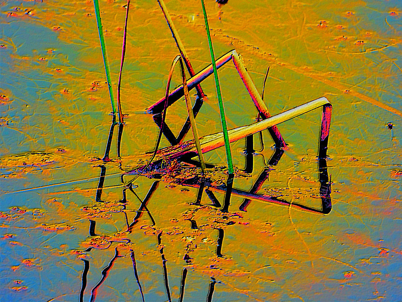 Bent water reeds abstract, original photo was shot at Glacier Ridge Metro Park outside Dublin, Ohio
