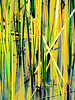 X marks the spot in this water reed abstraction, original photo shot at Glacier Ridge Metro Park outside Dublin, Ohio.