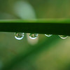Raindrops on twig in green