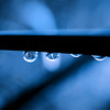 Raindrops on twig in blue tones