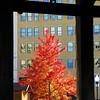 Tree  (8x10)