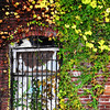 Ivy Window   (8x10)