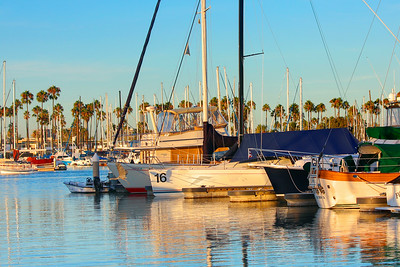 Alamitos Bay 7_14