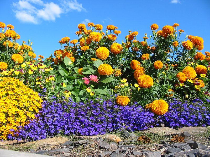 Fairbanks wildflowers.
