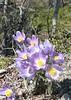 Alaska wildflowers.