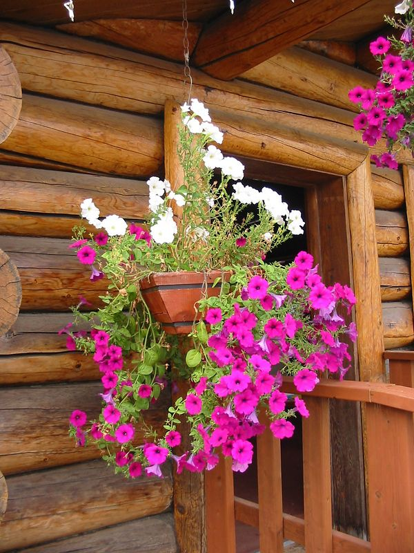 Alaska has many hanging baskets in the summer.