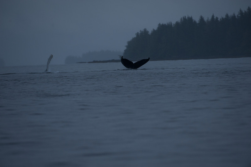 Alaska, Cruise,Whales, Brooks <br /> Lodge, etc.